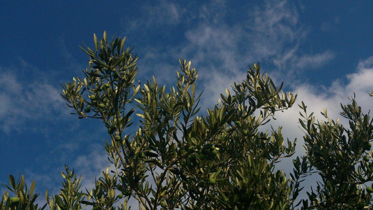 Biodiversidad campos de olivos